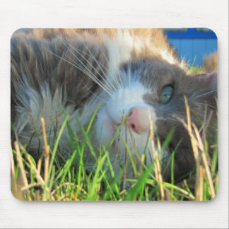 Sunny Cat is Sunny Mouse Pad