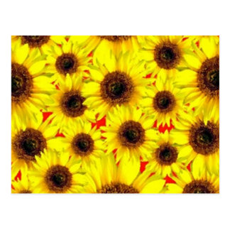 Sunny Cheerful Sunflower Macro Floral Collage Postcard