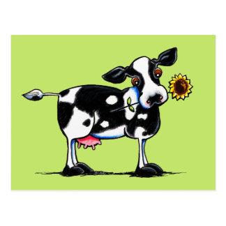 Sunny Cow Postcard