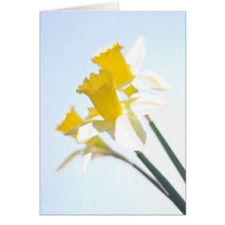 Sunny Daffodils on Blue Greetings Card