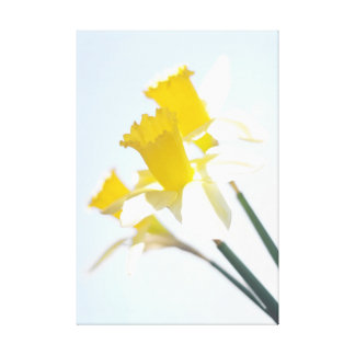 Sunny Daffodils on Blue Sky Canvas Print