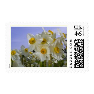 Sunny Daffodils Stamp