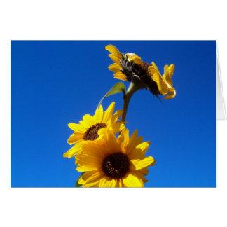 sunny day card