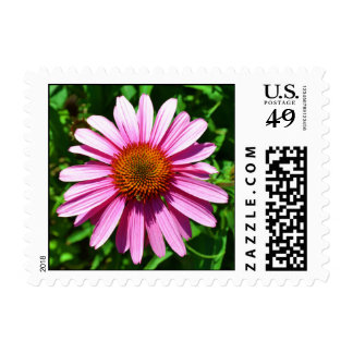 Sunny Day Echinacea Flower Stamp
