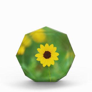 sunny day flower award
