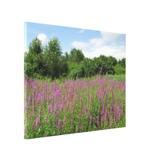 Sunny Day Meadow Canvas