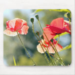Sunny day poppies mousepad