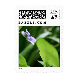 Sunny day - Wild Violets Postage