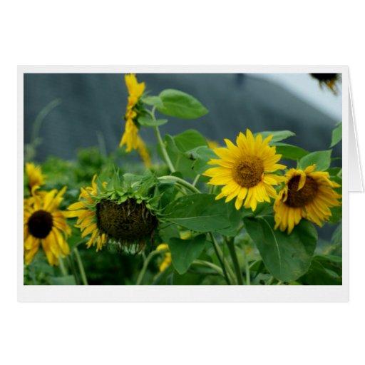 Sunny Days Stationery Note Card