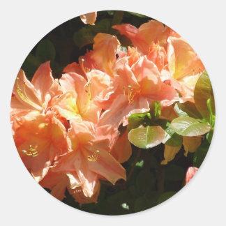 Sunny Delight Classic Round Sticker