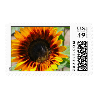 Sunny Disposition Postage Stamp