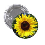Sunny Flower Corsage - Allergy-Free! Buttons