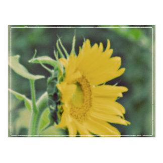 Sunny Flower Postcards