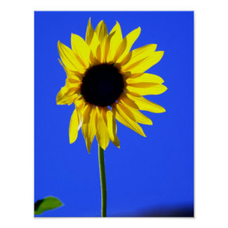 Sunny Flower Posters