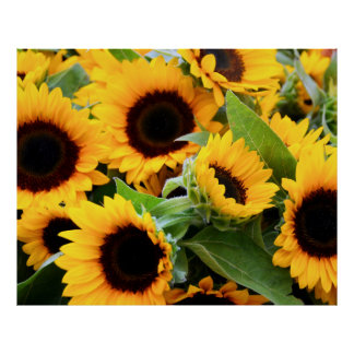 Sunny Flowers Poster