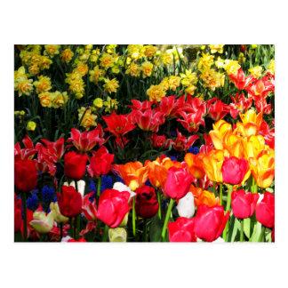 Sunny Garden Postcard