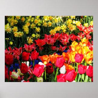 Sunny Garden Poster