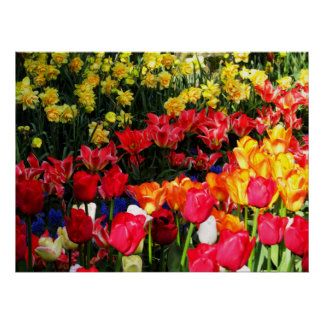 Sunny Garden Posters