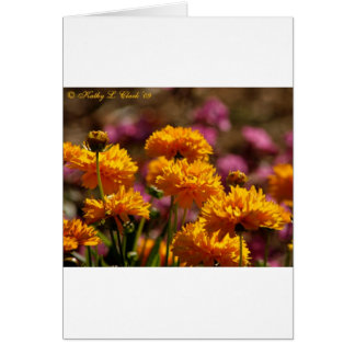 Sunny Golden Coreopsis Flowers Card