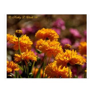 Sunny Golden Coreopsis Flowers Postcard