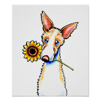 Sunny Ibizan Hound Wirehaired Off-Leash Art™ Poster