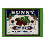 Sunny Loganberry Fruit