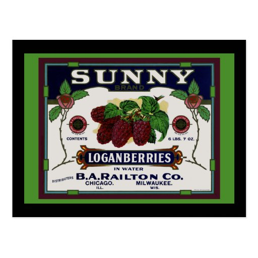 Sunny Loganberry Fruit Postcard