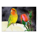 Sunny Lovebird Greeting Card