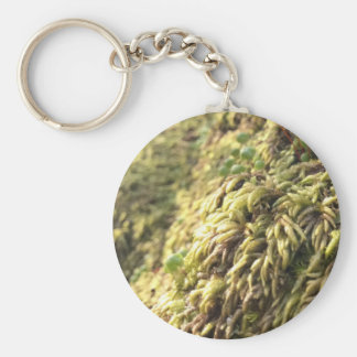 Sunny Moss and Worts Keychain