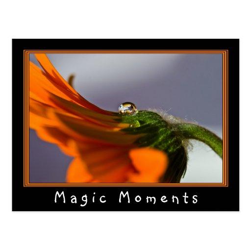 Sunny Orange Flower Postcard