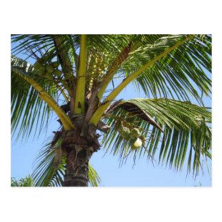 Sunny Palm Postcard
