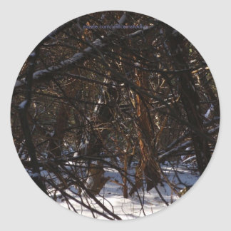 Sunny Patch in Snowy Trees Classic Round Sticker