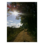 Sunny Path Poster