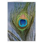 Sunny Peacock Feather Card