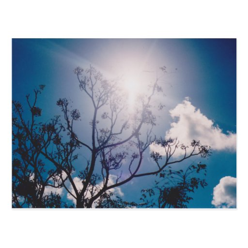 Sunny Postcards
