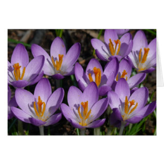 Sunny Purple Crocuses Early Spring Flowers Card
