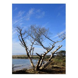 Sunny Sand Lake Oregon Postcard