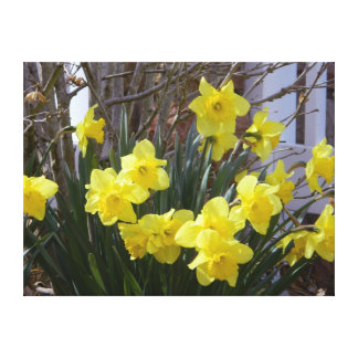 Sunny Spring Daffodils Wrapped Canvas Print