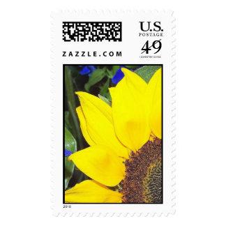 Sunny Stamp