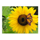 Sunny Summer Postcard