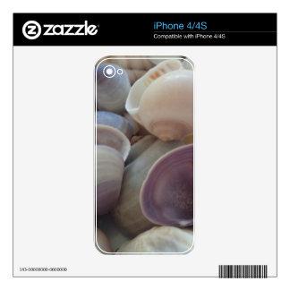 Sunny Summer Seashells, Sea Shell Beach Ocean iPhone 4S Skin