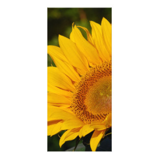 Sunny sunflower and meaning rack card
