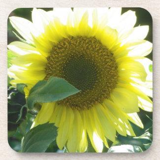 Sunny Sunflower Beverage Coaster