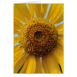 Sunny Sunflower -  Giant Yellow Center Close up Stationery Note Card