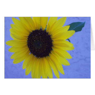 Sunny Sunflower on Blue Background Greeting Card