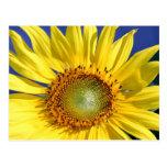 Sunny Sunflower Postcard