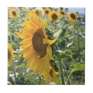 Sunny Sunflower Ceramic Tile