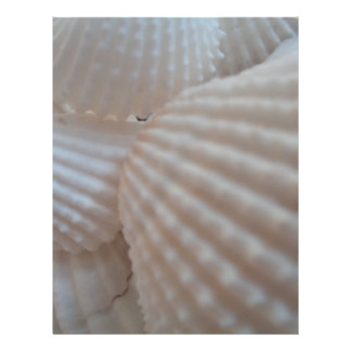 Sunny White Seashells, Sea Shell Beach Summer Love Letterhead