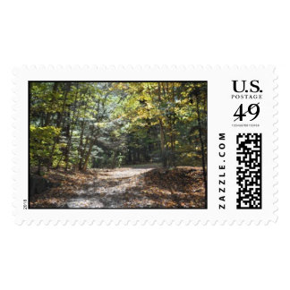 Sunny wooded clearing stamps