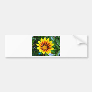 Sunny Yellow and Red Flower Blossom Bumper Sticker